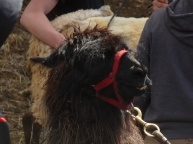 Kuzco the llama was a big hit